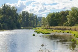 Scatter Creek Chehalis River