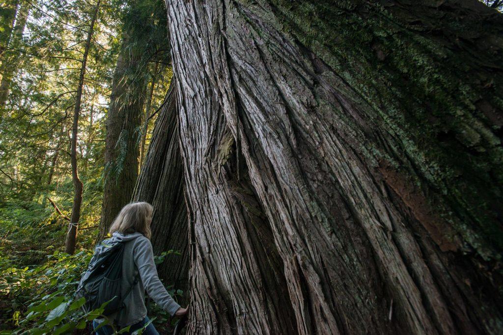 Woman looks up tree