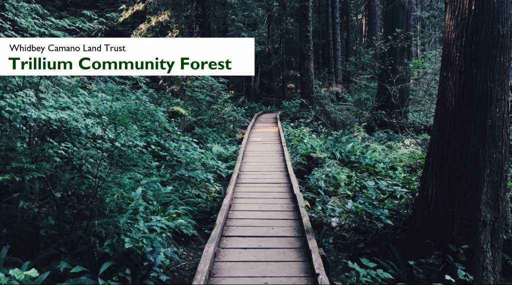 Trillium Creek Forest by Whidbey Camano Land Trust